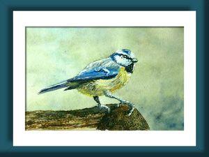 mésange bleue 1 pt